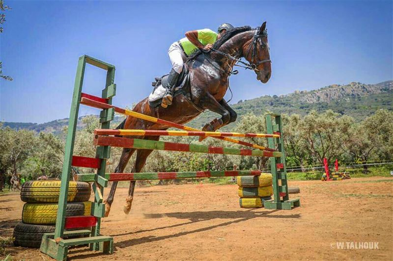 Sky is the limit... horse horses horsesofinstagram horsebackriding ... (Al Adham)