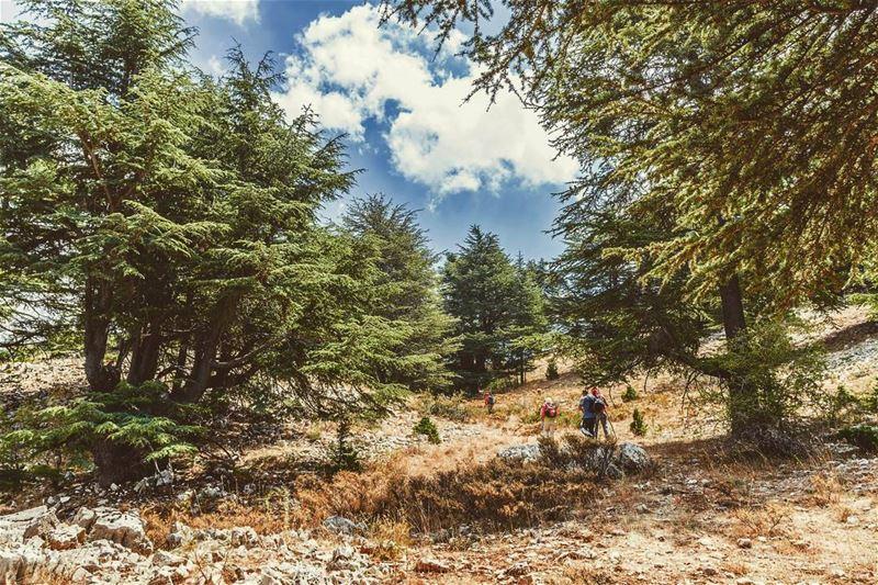 Hadath el Jebbe - Tannourine, Lebanon lebanon hiking nature outdoors ... (Hadath El-Jubbah, Liban-Nord, Lebanon)
