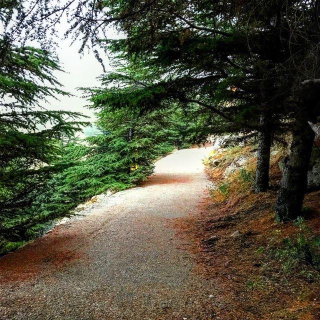 ~..Spoil your Soul..~ 🕊 lustforlife thewayyouread thewayyoufeel ... (Falougha, Mont-Liban, Lebanon)