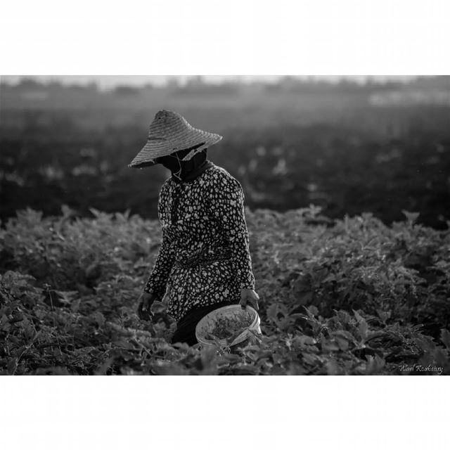 bnw  blackandwhite  farmers  photography  woman  farmer  farming  people ...
