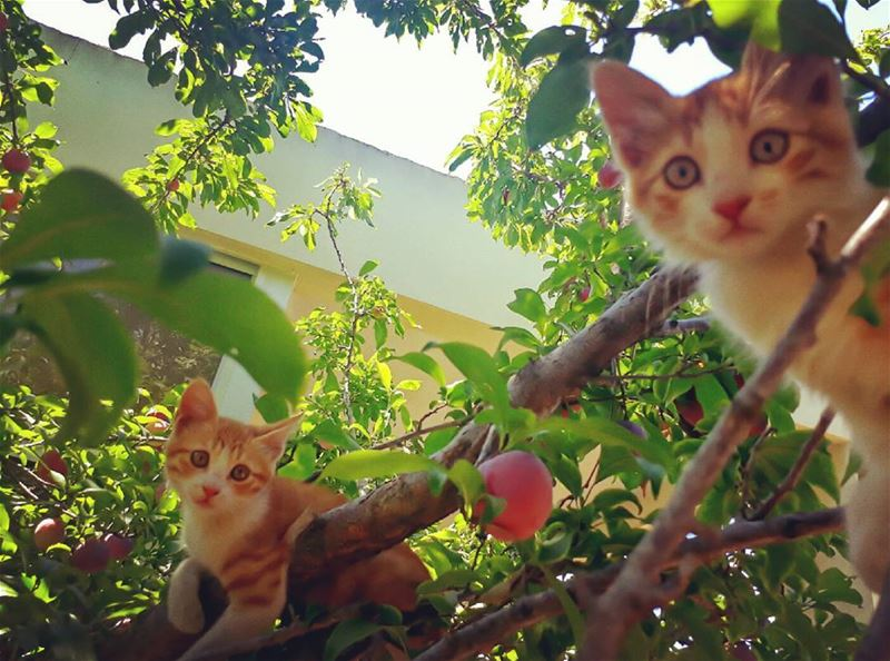 cat rasnhash batroun lebanon kalawounphoto monbeauliban 🐱 ... (Ra'S Nhash, Liban-Nord, Lebanon)