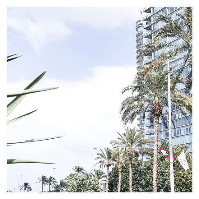Coconut way of life 🍹🌴😎 (Beirut, Lebanon)