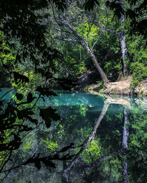 nature  reflection  nature_uc  nikon  d810  beautiful  insta_lebanon ... (Chouwen)
