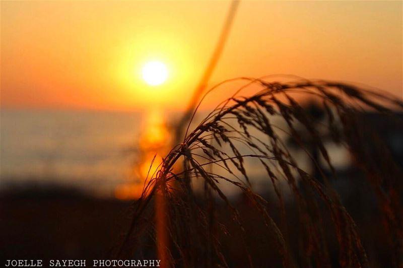 lebanonpicks photooftheday picoftheday instaphoto lebanonhouses ... (Batroûn)
