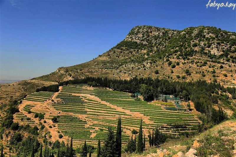 lebanon morning nature canon_photos monday naturelovers instacool... (Jezzîne, Al Janub, Lebanon)