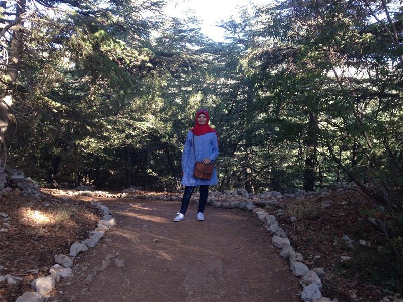 The beautiful road 🛤 beauty trees cedars green nature ... (Arz el Bâroûk)
