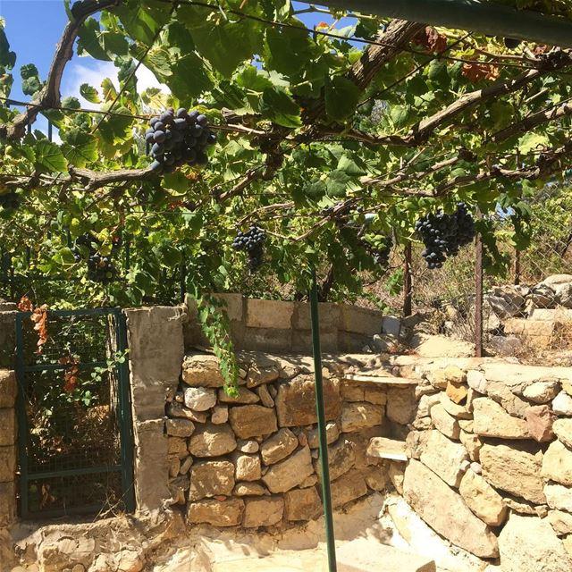 lebanon village garden summer grapes lebanonshots lebanon_hdr ... (Aïn Ksoûr, Mont-Liban, Lebanon)