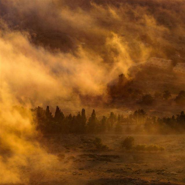Steamy Summer Sunset ⛅🌲 fog trees sunset summer road mountains ...