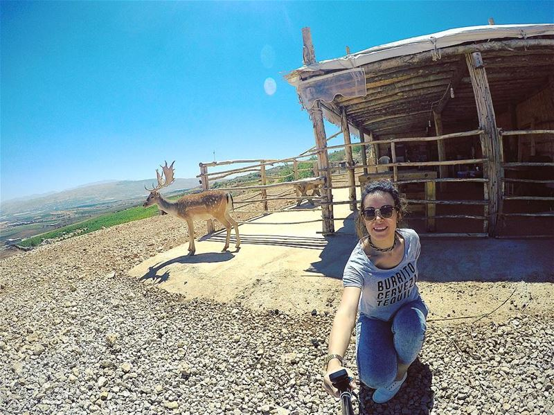 Deer•Smile 🦌 deer smile wildlife wild outdoor nature sky mountain... (`Ana, Béqaa, Lebanon)