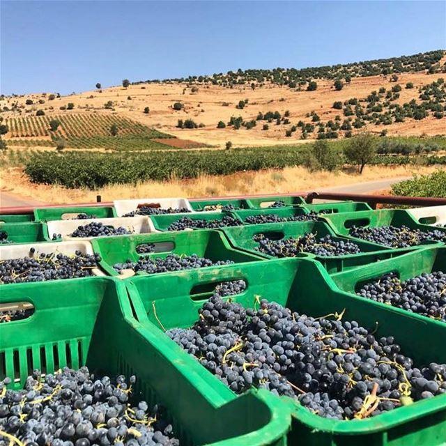 The best way to start your week 🍷🍷 @ixsirwine ... fresh wine winery...