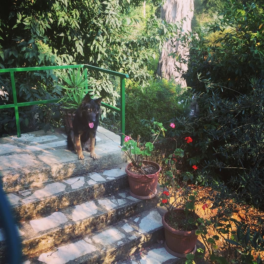 Be the person your dog thinks you are 🐶 dog garden flowers house ... (Dlebta, Mont-Liban, Lebanon)