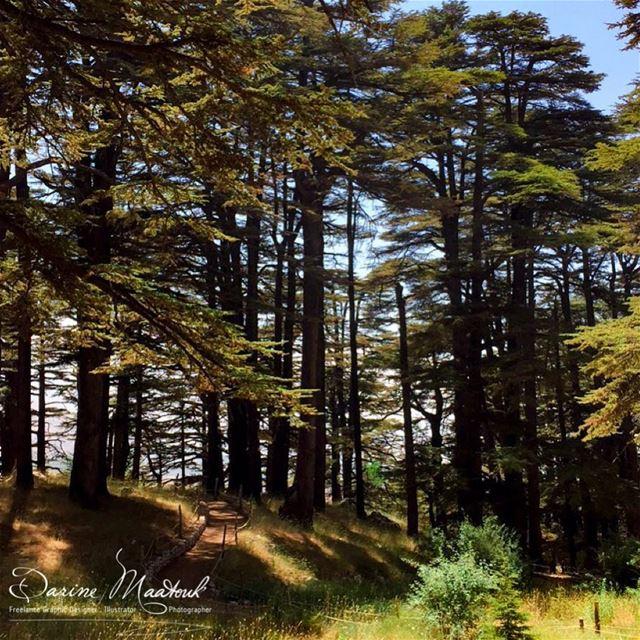 keepitwild simplyadventure liveoutdoors beautifuldestinations ... (Cedars of God)