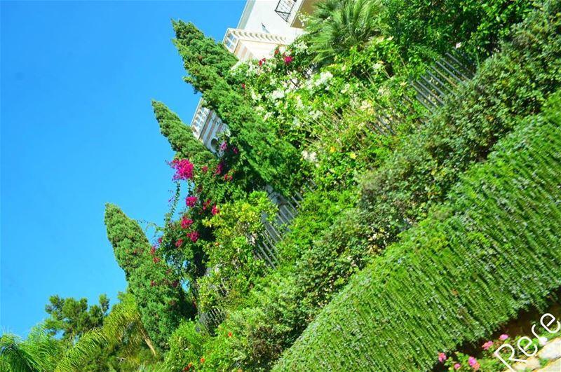 Her beauty is hidden under leaves of heaven.. rere🌹 green ...