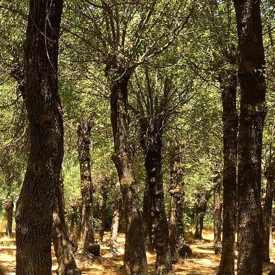 Delve into an enchantedforest @livelovebekaa 🌳🌳🌳 nature ... (Deïr Taanâyel, Béqaa, Lebanon)