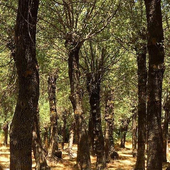Delve into an enchantedforest @livelovebekaa 🌳🌳🌳 nature ... (Deïr Taanâyel, Béqaa, Lebanon)