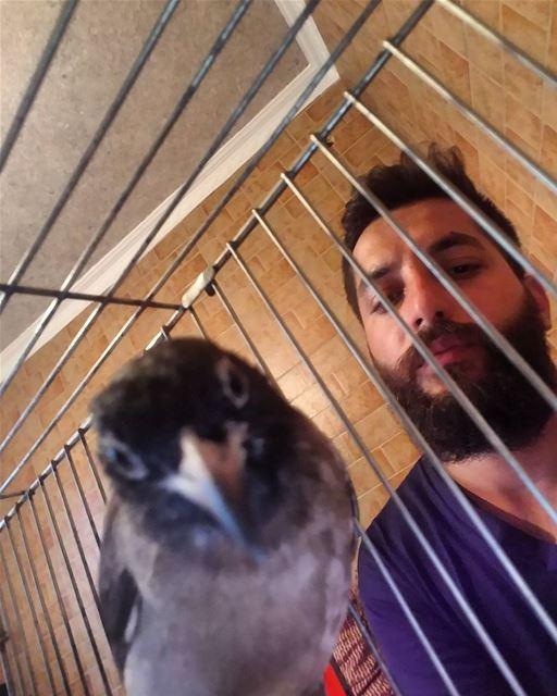 My friend•••• bulbuls bolbol lebanese birds bird lebanon beirut... (Beirut, Lebanon)