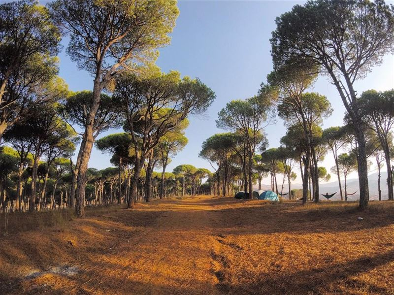 Trees are the earth's endless effort to speak to the listening heaven ⛰🌲... (Marjayoûn, Al Janub, Lebanon)