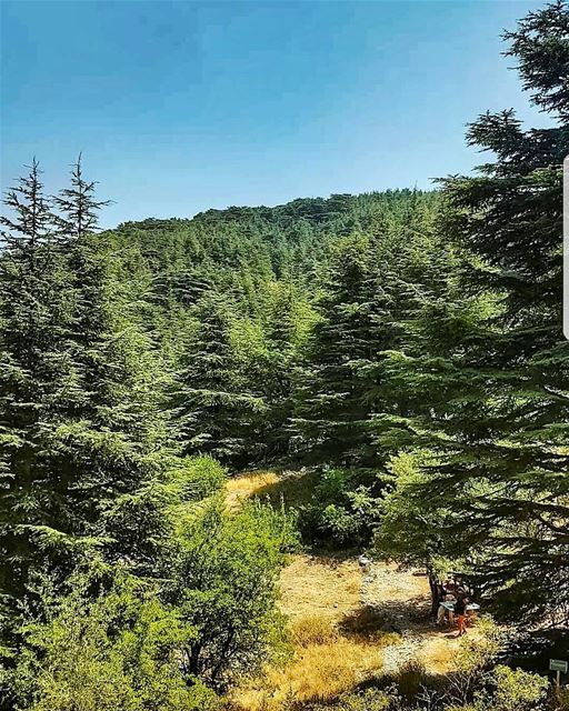 Absolute nature trees cedarsforest barouk nature naturephotography ... (Bâroûk, Mont-Liban, Lebanon)