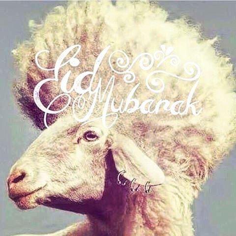 Happy Eid to all! اضحى مبارك 🙏🏻🙏🏻 adha goodmorning eidmubarak ...