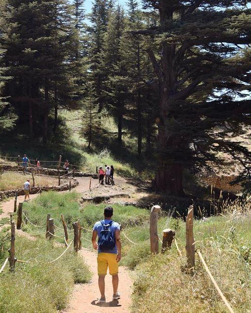 Promenons-nous dans les bois Bcharre CedarofGod________🇱🇧________... (El Arz, Liban-Nord, Lebanon)