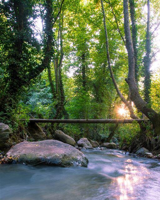 Nature's aura 🌿.... nature naturephotography landscape... (Bcharreh, Liban-Nord, Lebanon)