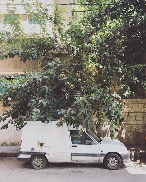 Beaters of Beirut (29) (Beirut, Lebanon)