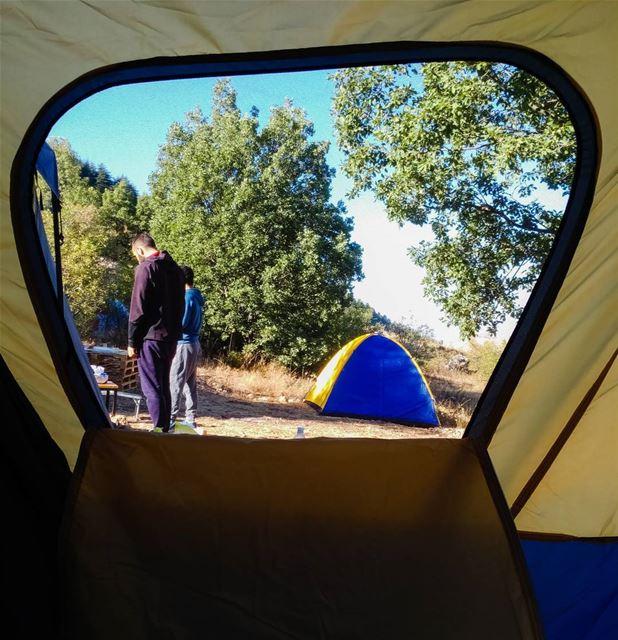 Window to the world 🌲 (Cedars Ground Campsite)