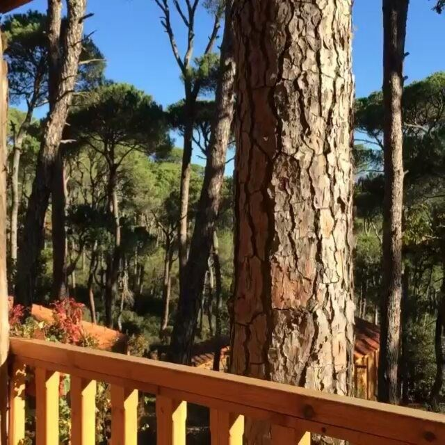A morning like this 🐦🏡🌄📸 @bassamkhattar Morning Mornings ... (La Maison de la Forêt)