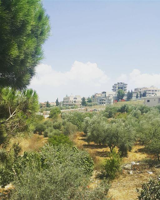 yaroun southlebanon nature view lebanon insta_lebanon olivetrees ...