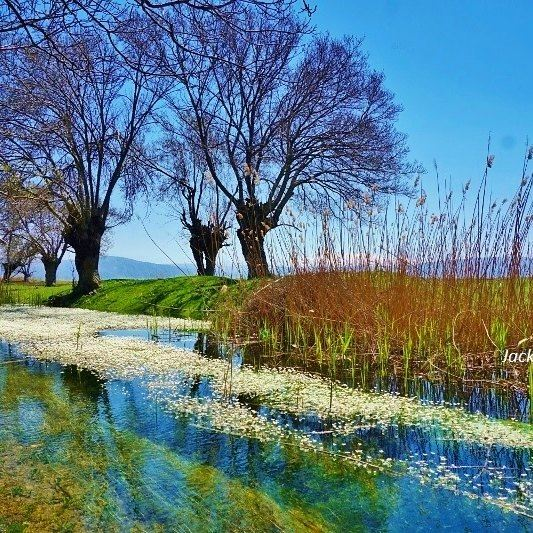 Aamik wetlands aamik wetlands nature trees liveloveaamik Bekaa ...