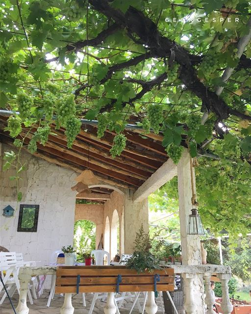 Under the vine... El Mejdel, Lebanon 🇱🇧 @guitabedandbloom ........ (El Mejdel, Mont-Liban, Lebanon)