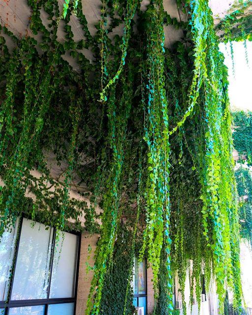 //Green cascades// green nature lebanon livelovelebanon harissa beauty... (Harîssa, Mont-Liban, Lebanon)