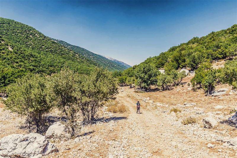 Chouf Reserve, Lebanon lebanon hiking nature outdoors livelovelebanon... (Arz el Bâroûk)