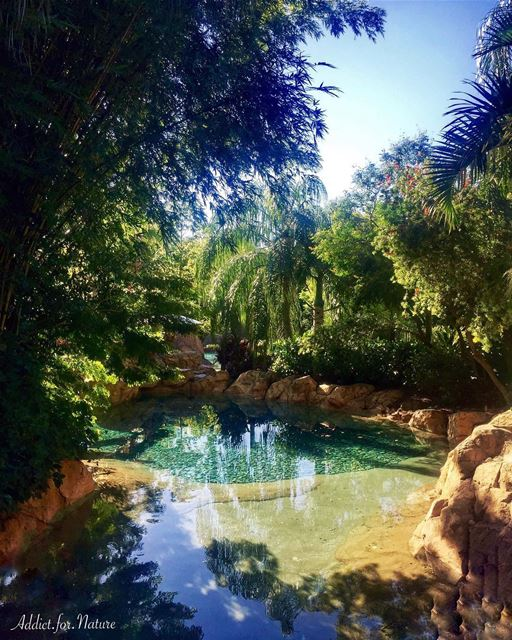 Try to find beauty wherever you go!.... palmtreescape ... (Discovery Cove)