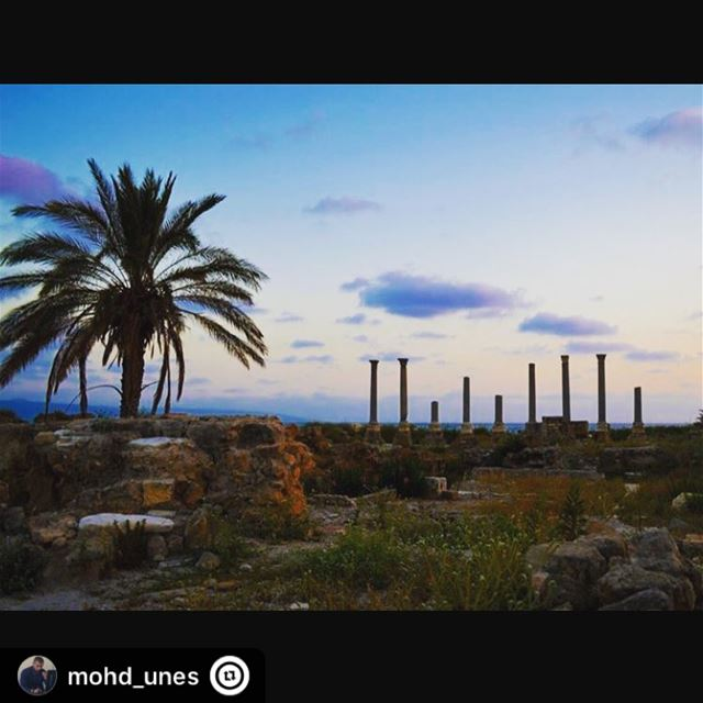 """ tyre lebanon goodday like4like photography canon saturday sour ..."
