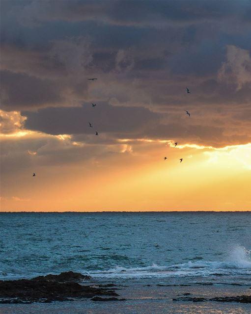 A flock. 🕊 ... (Tripoli, Lebanon)