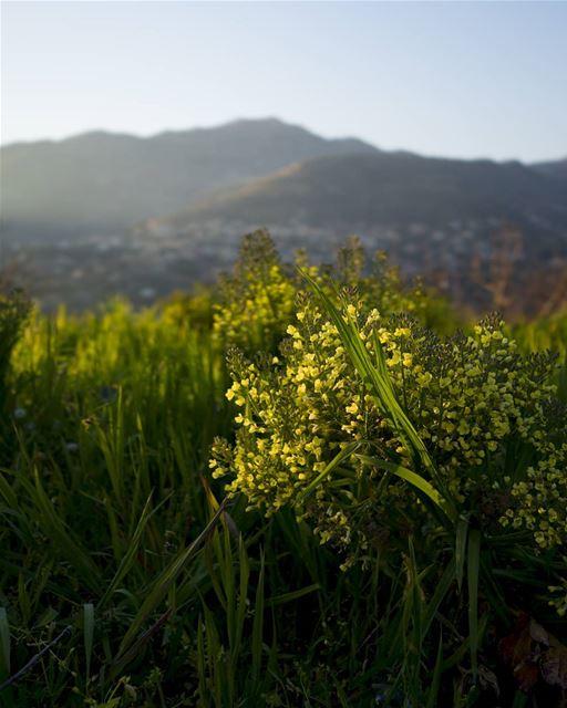 Mountain farm... (Lebanon)
