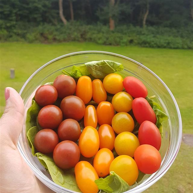 🌈My perfect snack 🌈Those tomatoes are super sweet 🍅with a side of ... (Germany)