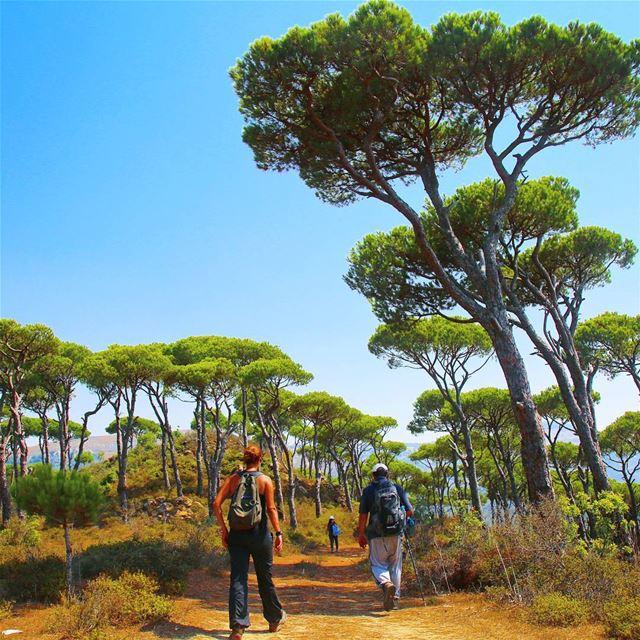 Walking might be your best CTRL + ALT + DEL...☀️🌲:::::::::::::::::::::::: (Jezzîne, Al Janub, Lebanon)