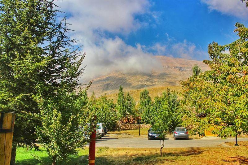 بيقولوا صغير بلدي ❤️@canon_photos @canonme @lebanoninapicture @beautiful (The Cedars of Lebanon)