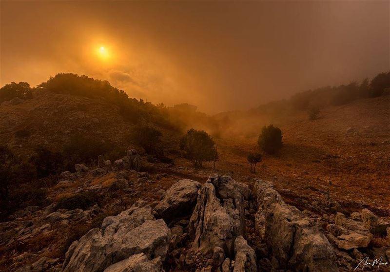 authentic sunset shoif reserve lebanon sun fog clouds foggy tree...