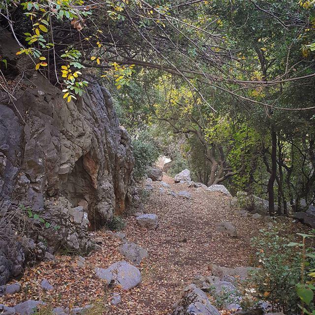 Hello September 🍂🍃🍁💚 (Kfardebian)