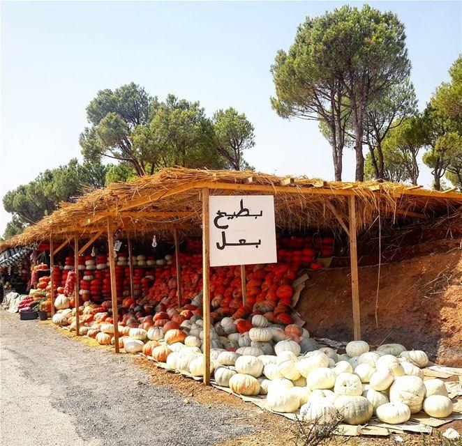 Ammiq Bekaa Lebanon 🎃🎃🎃 livelovelebanon livelovebeirut ... (`Ammiq, Béqaa, Lebanon)