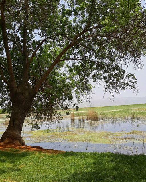 مهما يكون الجذع متيناً،، ف الشجرة الوحيدة يتم قطعها بسهولة 👌 👌 lebanon ...