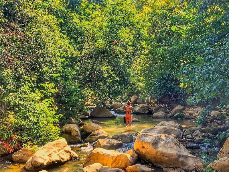 Join the water in making beats And watch the dance of the  trees ! ... (Eco Village lebanon)