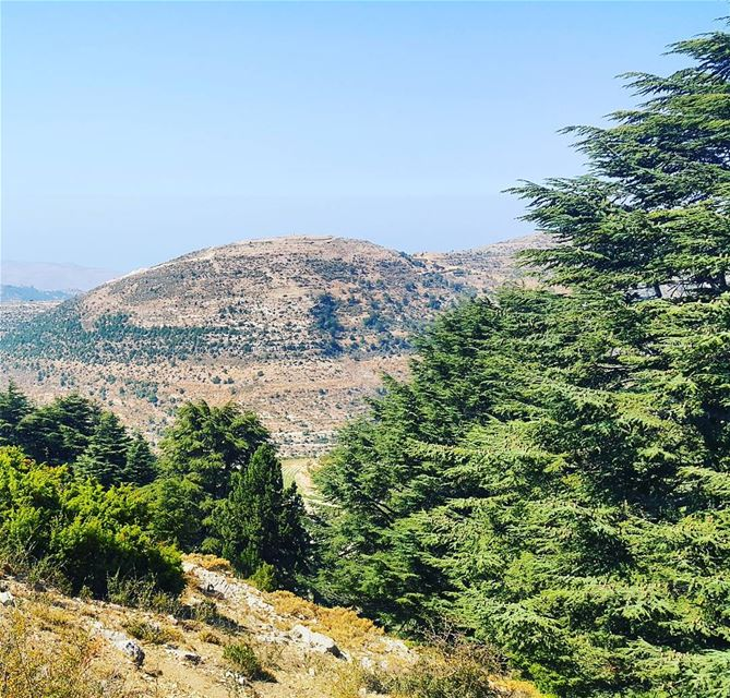 All those hours exploring the great outdoors made me more resilient and... (Karm el Mohr, North Lebanon)