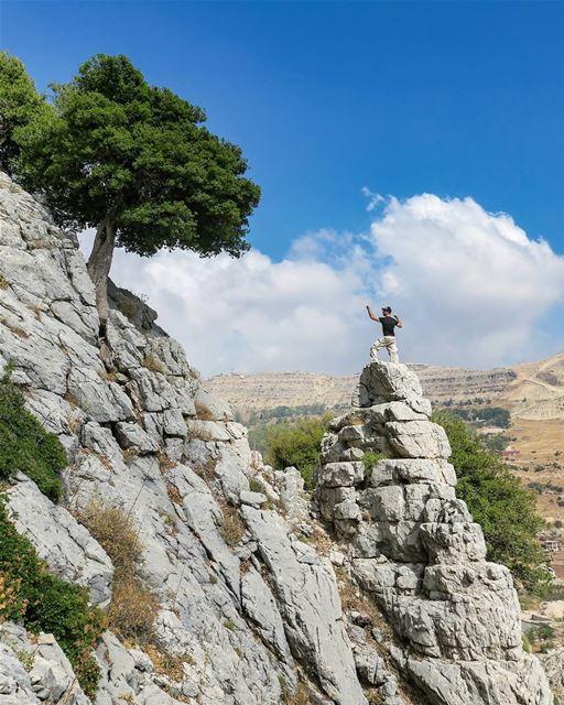 The higher, the better 🌳💪 hike climb rocks tree oak steep slope ...