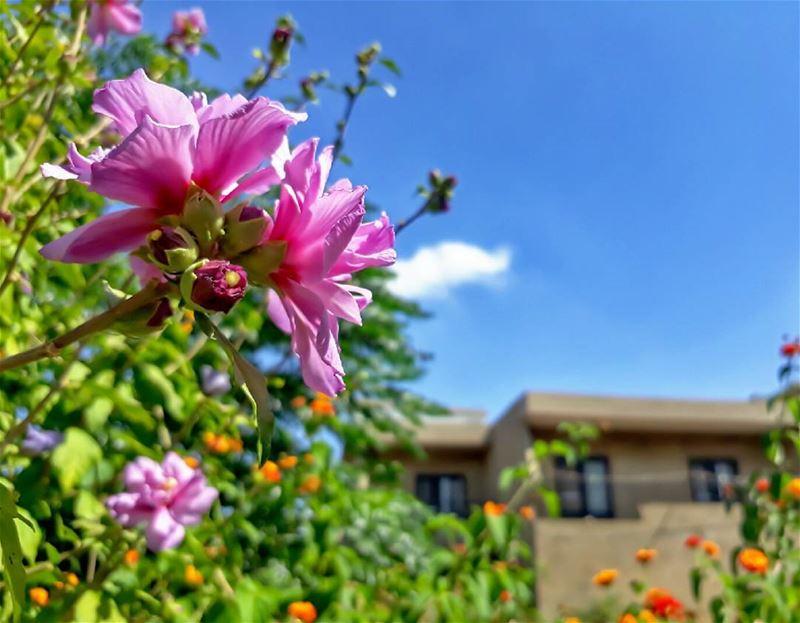 rasnhash batroun lebanon kalawounphoto flowers 🌹 livelovebatroun ... (Ra'S Nhash, Liban-Nord, Lebanon)