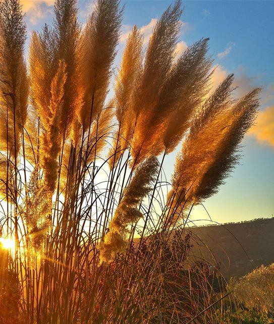 Beautiful background ❤ lebanon nature naturelovers natureporn ... (Bmariam, Mont-Liban, Lebanon)