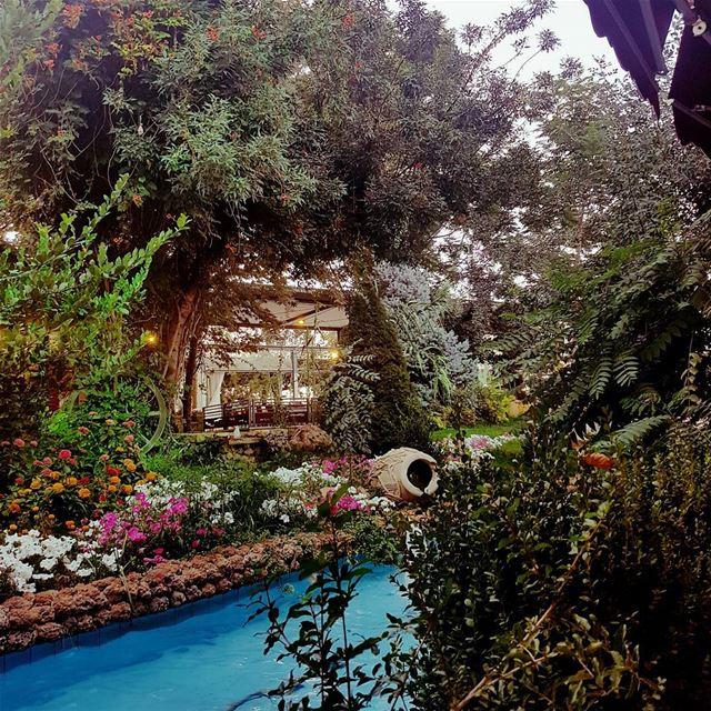 naturephotography nature lebanon livelovelebanon visitlebanon trees water...